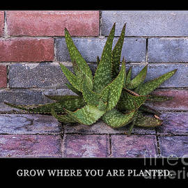 Priscilla Burgers - Grow Where You Are Planted