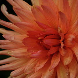 Christiane Schulze Art And Photography -  Grown With Love