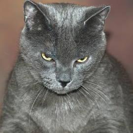 Richard Bryce and Family - Grumpy Cat