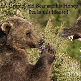 Wildlife Fine Art - Grumpy old Bear