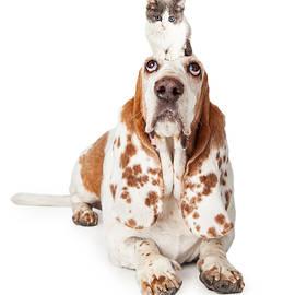 Guilty Looking Basset Hound Dog Laying   - Susan Schmitz