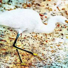 Barbara Chichester - Gulf Coast Snowy Egret