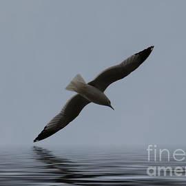 Mim White - Gull 1