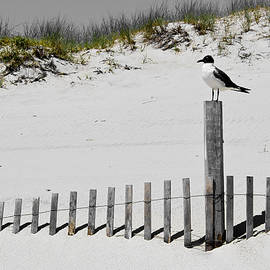 Colleen Kammerer - Gull at Island Beach