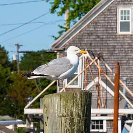 Allan Morrison - Gull at the Harbor