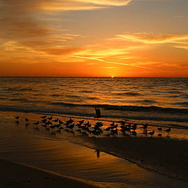 Christiane Schulze Art And Photography - Gulls Gather On The Beach At Sunset