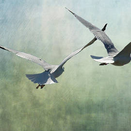 Annette Persinger - Gulls in Flight