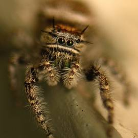 Sherry Pratt - Hairy Spider