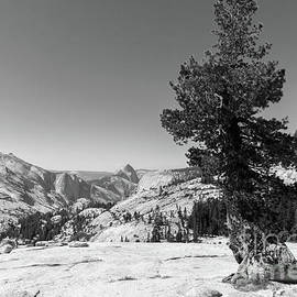 Wingsdomain Art and Photography - Half Dome and Yosemite Valley From Olmsted Point Tioga Pass Yosemite California dsc04274bw