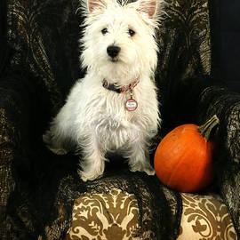Amanda Stadther - Halloween Dog