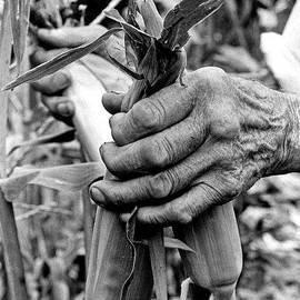 Georgia Sheron - Hands With Corn Ears