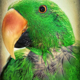 Mariola Bitner - Handsome Parrot
