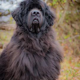 Edie Mendenhall - Handsome Yogi Bear