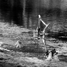 Denise Dube - Hanging at the Wetlands BW