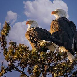 Priscilla Burgers - Happy Bald Eagle Couple