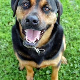 Aaron Wages - Happy Dog