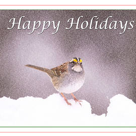 Daphne Sampson - Happy Holidays Winter Sparrow