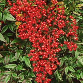 Bijan Pirnia - Happy Red