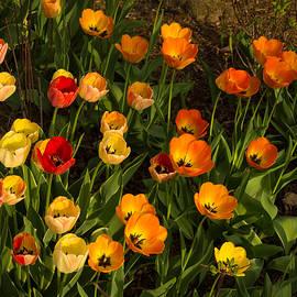 Georgia Mizuleva - Happy Sunny Messy Tulip Tangle