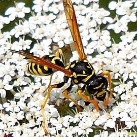 Casavecchia Photo Art - Happy Wasp