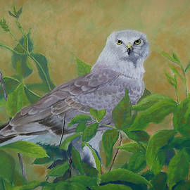 Marcus Moller - Harrier in the Bush