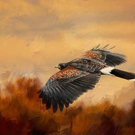 Jai Johnson - Harris Hawk In Autumn