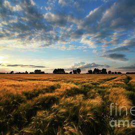 Franziskus Pfleghart - Harvest