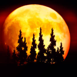 Kathy Franklin - Harvest Moon