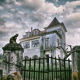 Carlos Caetano - Haunted House and a Cat