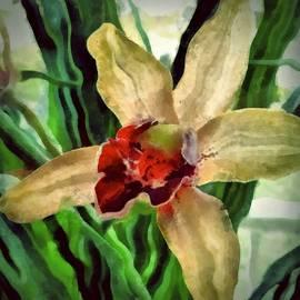 Patricia Strand - Hawaiian Orchid