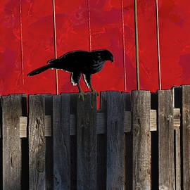 Don Gradner - Hawk