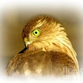 Barbara S Nickerson - Hawk Eye