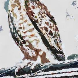 Catherine Lott - Hawk Fragmented