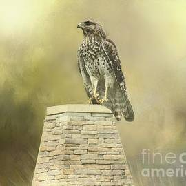 Hawk Surveying His Territory
