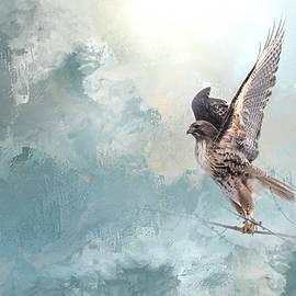K Powers Photography - Hawk