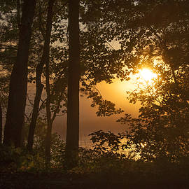 Donna Doherty - Hazy Morning Sunrise Through the Trees