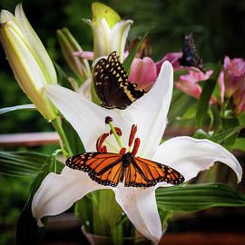 Karen Wiles - He Still Gives Me Butterflies