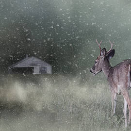 Jai Johnson - Heading Home In The First Snow