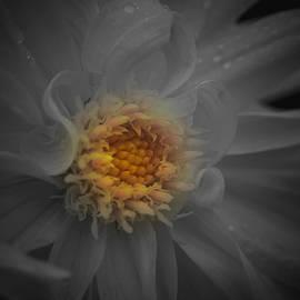Richard Andrews - Heart of Gold