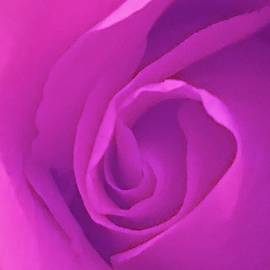 Marian Palucci-Lonzetta - Heart of the Rose