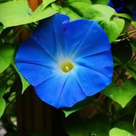 Tina  LeCour - Heavenly Blue