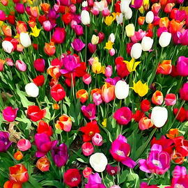 Ed Weidman - Hecksher Tulips #5