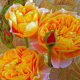 Michele  Avanti - Heirloom Impressionist Roses