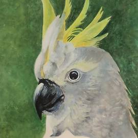 Anne Gardner - Sulphur crested cockatoo