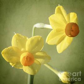 Linda Lees - Heralding Spring
