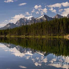 Tracy Knauer - Herbert Lake 1