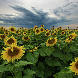 Here Comes The Sun - Aaron J Groen