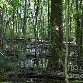 William Norton - Hermit Swamp