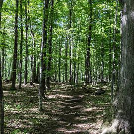William Norton - Hermit Trail