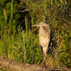 Al Powell Photography USA - Heron at Sundown
